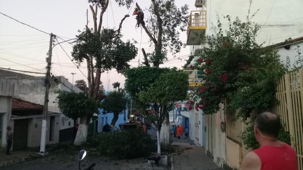 Prefeitura de União cortou árvores em situação de risco