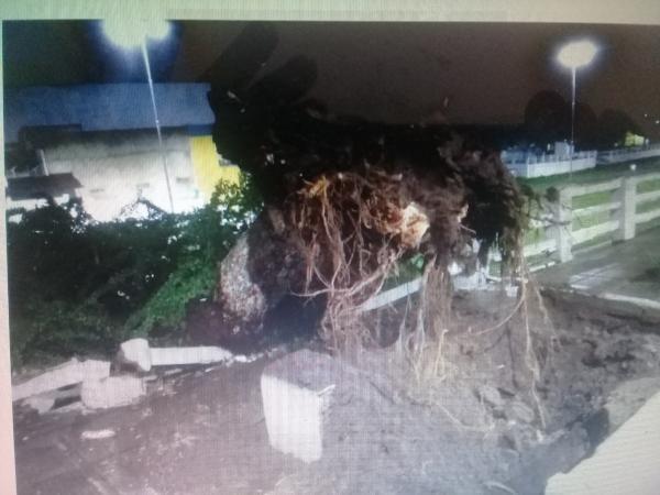 Chuvas derrubam árvore no centro de União dos Palmares.